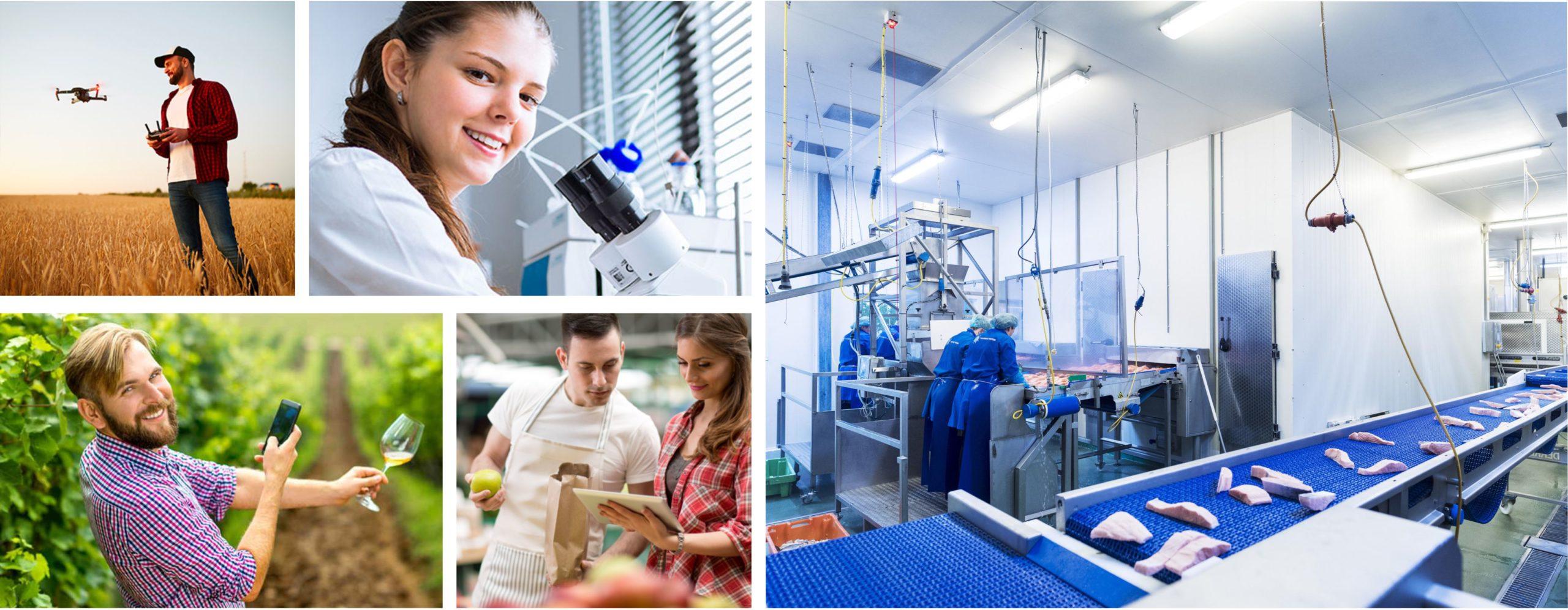 Tecnico superiore responsabile della produzione e delle trasformazioni agrarie – agro alimentare e agro-industriale